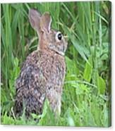 Peter Rabbit Canvas Print