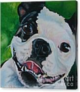Petey Boy Canvas Print
