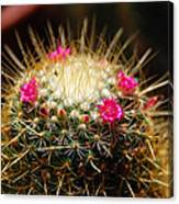 Petite Cactus Canvas Print