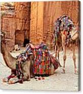Petra Camels Canvas Print