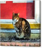 Pets - Tabby Cat By Red Door Canvas Print