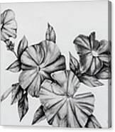 Petunias Canvas Print