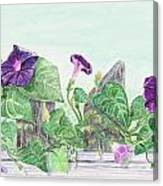 Petunias On The Fence Canvas Print