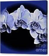 Phalaenopsis 2 Canvas Print
