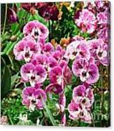Phalaenopsis Orchids Canvas Print