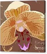Phalaenopsis Synopsis Canvas Print