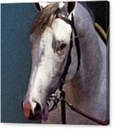 Phantom Lover - Portrait Of A Race Horse Canvas Print