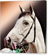 Phantom Lover Race Horse Looking On Canvas Print