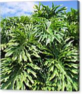 Philodendron 1 Canvas Print