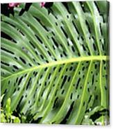 Philodendron 6 Canvas Print