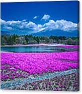 Phlox And Mt. Fuji Canvas Print