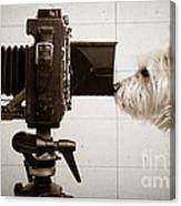 Pho Dog Grapher - Ground Glass View Canvas Print