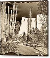 Phoenix Botanical Garden Path Canvas Print