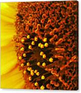 Photon Torpedoes Primed Canvas Print