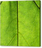 Photosynthesis - Featured 3 Canvas Print
