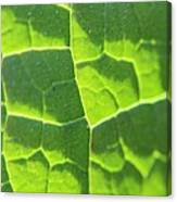 Photosynthesis  Canvas Print