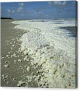 Phytoplankton Bloom On Beach Canvas Print