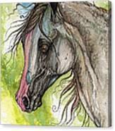 Piber Polish Arabian Horse Watercolor Painting 3 Canvas Print