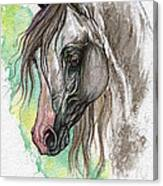 Piber Polish Arabian Horse Watercolor Painting Canvas Print