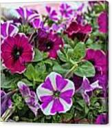 Pick Purple Canvas Print