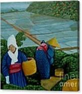Picking The Green Tea Canvas Print
