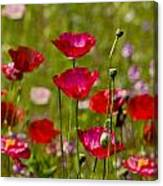 Picture Perfect Poppies Canvas Print