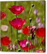 Picture Perfect Too Canvas Print