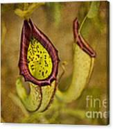 Picture Plant Canvas Print
