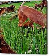 Pieces In The Lawn Canvas Print