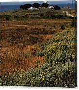 Piedras Blancas Lighthouse Canvas Print