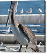 Pier Brown Pelican Canvas Print