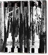 Pier Pilings Black And White Canvas Print