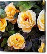 Pierre's Peach Roses Canvas Print