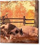 Pig Race Canvas Print