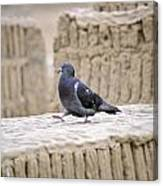 Pigeon At Huaca Pucllana In Lima Peru Canvas Print