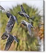 Pigeon Brigade Canvas Print