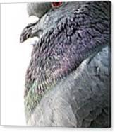 Pigeon Portrait Canvas Print