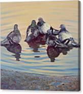 Pigeon Talk Canvas Print
