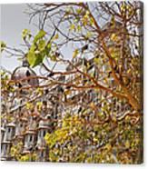 Pigeon Tree At The Taj Canvas Print