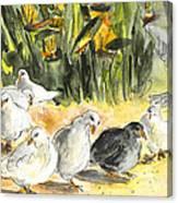 Pigeons In Benidorm Canvas Print