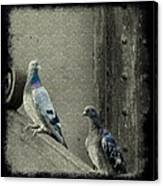 Pigeons In Damask Canvas Print