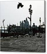Pigeons Of San Marco  Canvas Print