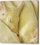 Pigs Sleeping Canvas Print