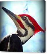 Pileated Close Up Canvas Print