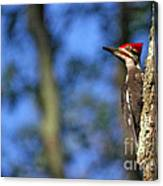 Pileated Series #14 Canvas Print