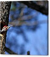 Pileated Series #3 Canvas Print