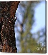 Pileated Series #5 Canvas Print