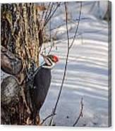 Pileated Woodpecker Winter Canvas Print