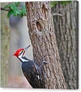 Pileated Woodpecker On Tree Canvas Print