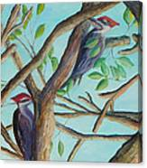 Pileated Woodpeckers Canvas Print